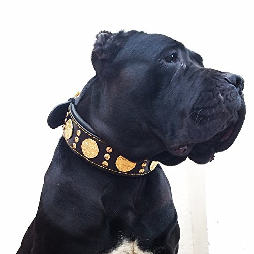Bestia Maximus genuine leather dog collar, Large breeds, cane corso,...