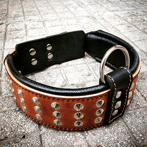 Bestia Genuine Leather Dog Collar with Studs and Soft Leather Cushion....
