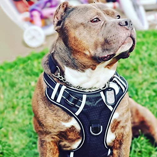 BABYLTRL Big Dog Harness No Pull Adjustable Pet Reflective Oxford Soft...
