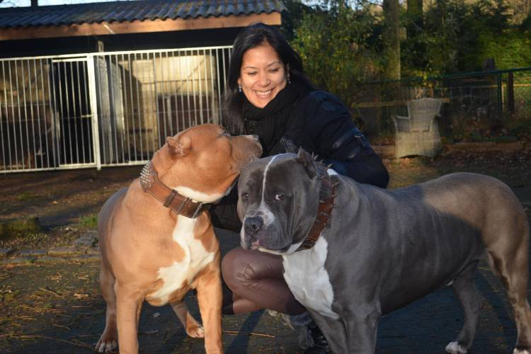 2 American Bully XXL with Woman