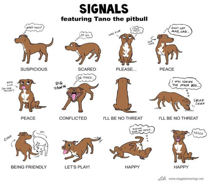 Pit bull Dogs and Behavior
