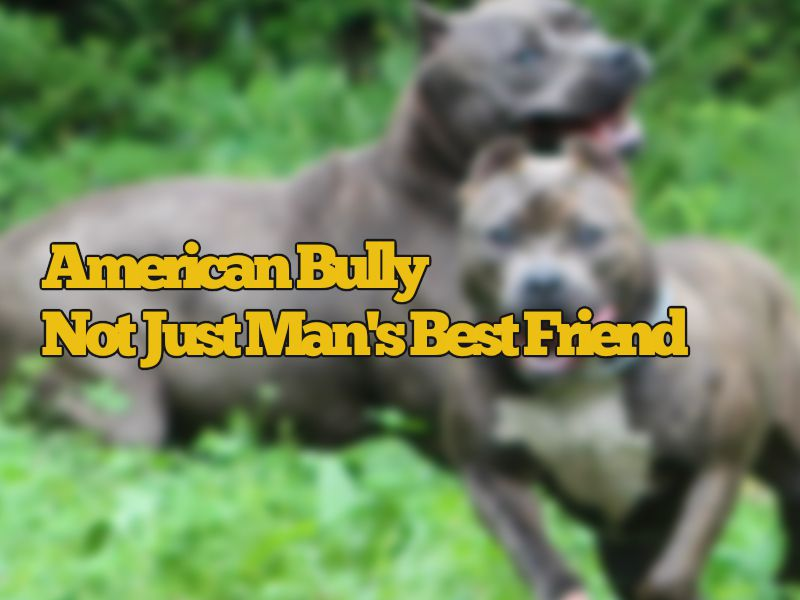Why An American Bully is not Just a Man Best Friend