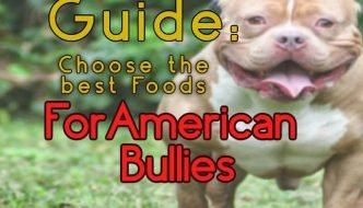Foods for American Bully Dogs Guide