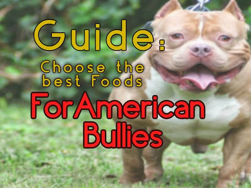 Tips On How To Choose The Proper Foods For Pitbull and American Bully Dogs
