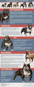 The Different Sizes of American Bully Dog Breeds