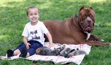 5 Reasons Why You Should Get White Pit Bull