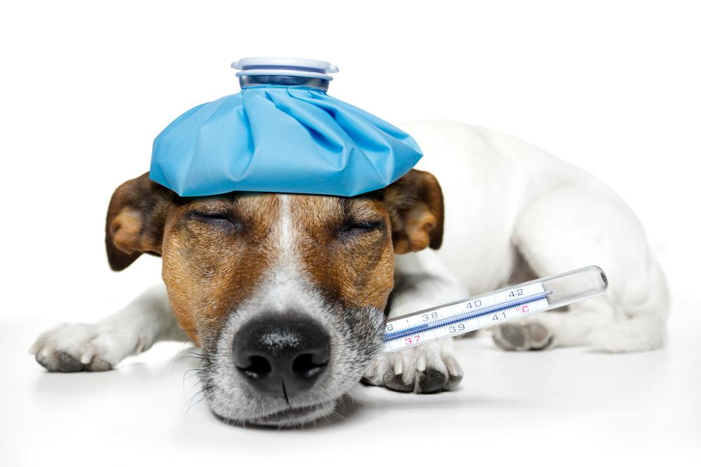 Dog Health Problems List