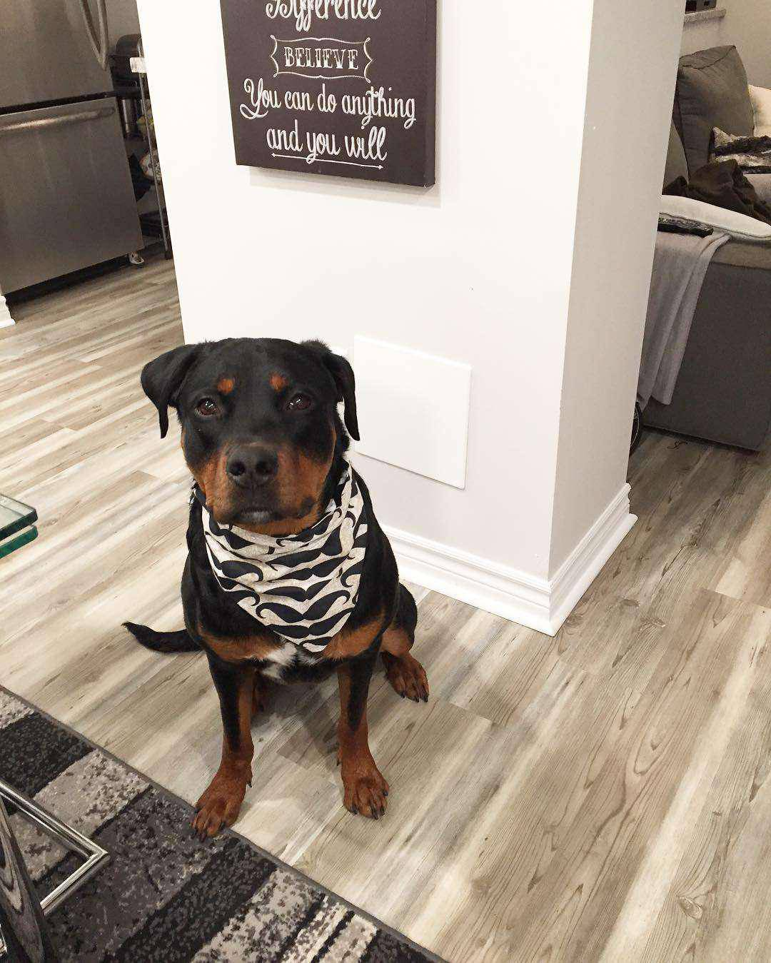 rottweiler pitbull mix facts