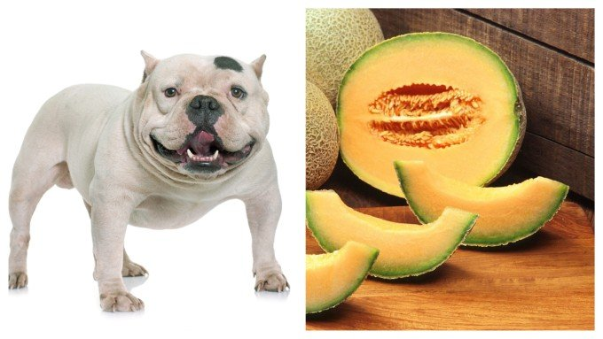 Can Dogs Eat Cantaloupe? Is It
