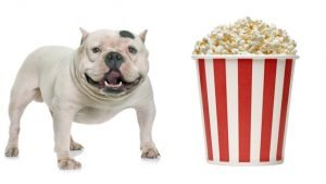 Can Dogs Eat Popcorn guide