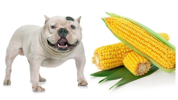 Can Dogs Eat Corns Guide