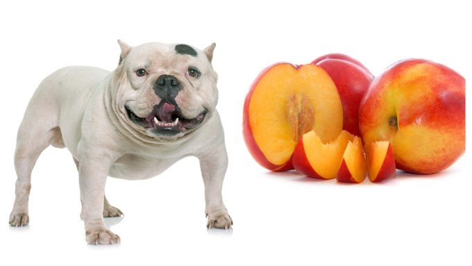Can Dogs Eat Peaches