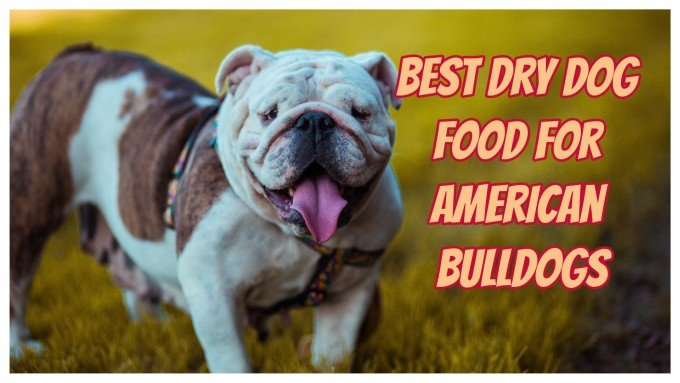 Dog Food for American Bulldogs Reviews