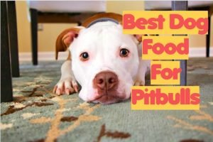 Dry Dog Food for Pitbulls Review