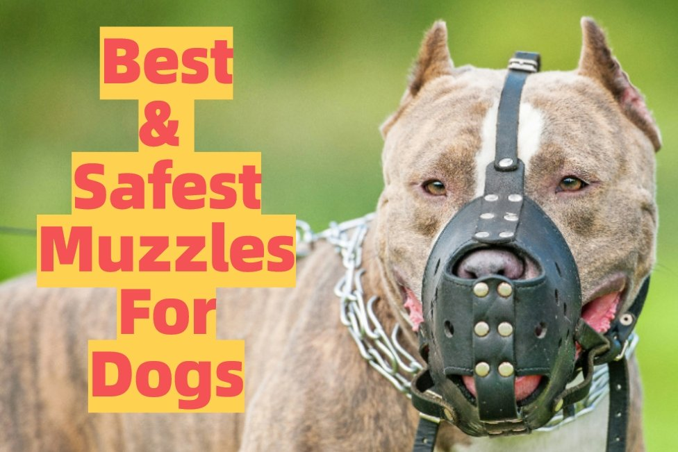 Types and Safest Dog Muzzles