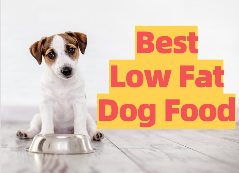 List of Low Fat Foods For Dogs