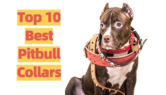 Top Rated Pitbull Collars List