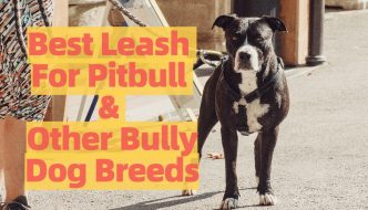 Top Rated Pitbull Leash