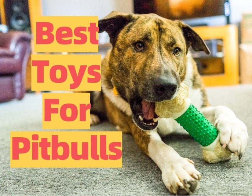 Toys For Adult and Puppy Pitbulls