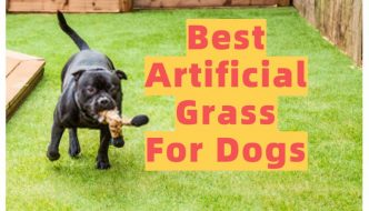 Best Artificial Grass For Dogs (Review)