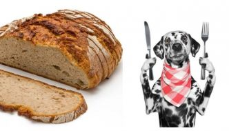 can dogs eat bread guide