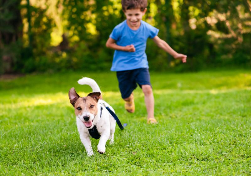 Kid and dog playing on a grass