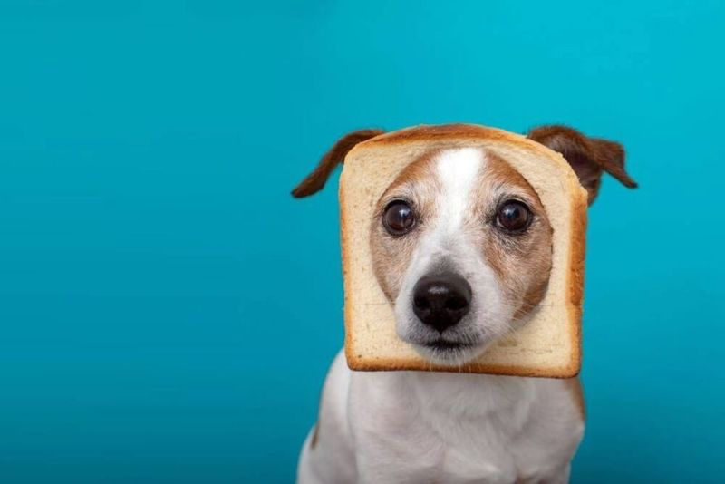 Dog with bread on his face