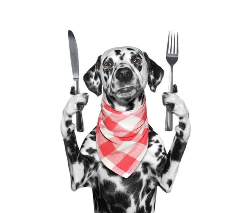 dalmatian with fork and table knife