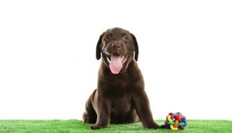 Type of Grass For Dogs Guide