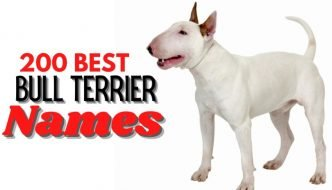 best names for bull terrier