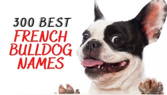 list of names for french bulldog