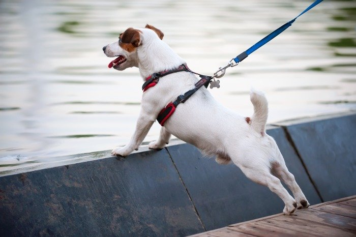 types of dog harness for puppies